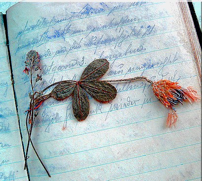 scriverediario