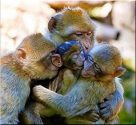 la famiglia di scimmie1